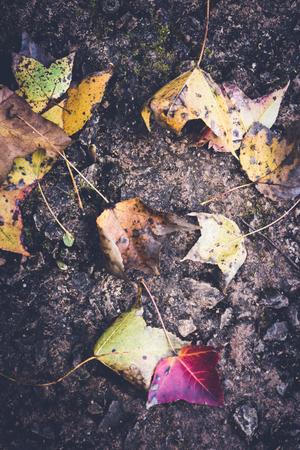 배경 자연입니다. 자연 배경 단풍 나무입니다. 바닥에