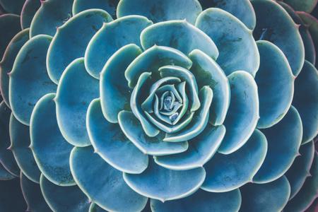 background nature. Natural background Cactus succulent plant Stock Photo