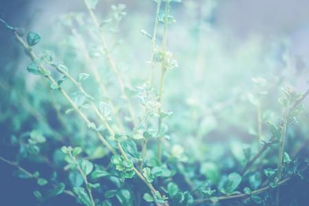 녹색 잎의 자연 배경입니다. 배경 녹색 나뭇잎. 샴 거친 부시