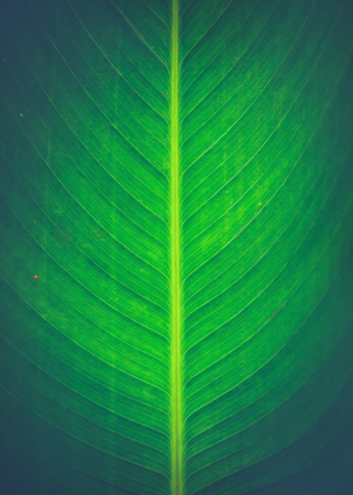 Natural background of green leaves. Background leaves green.