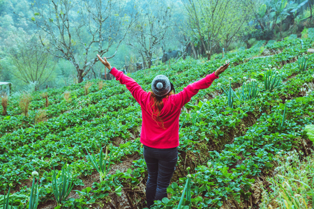 woman asian travel nature. Travel relax.. Keep strawberry in the farm. On the Moutain.  At summer.
