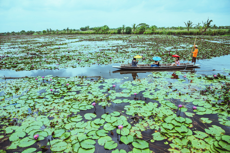 the tourist Sit on a rowing boat Watch the lotus in the marsh