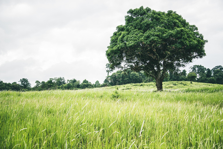 Rural landscape. Nature meadow mountain tree. Big tree Stock Photo