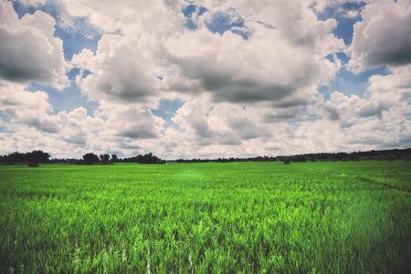 Landscape rural landscape. Fields in season Natural mountains. Foto de archivo - 121629506