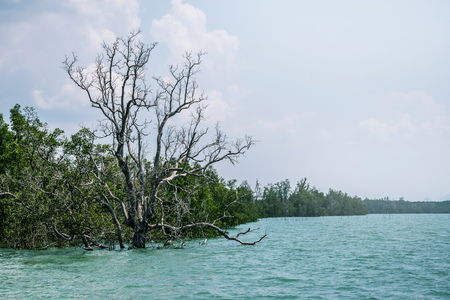Travel Asia holiday. landscape Andaman Sea mangrove mangrove conservation area 스톡 콘텐츠