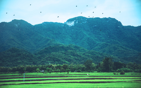 Rural landscape. Fields in season Natural mountains. There are birds in the sky. Stock Photo