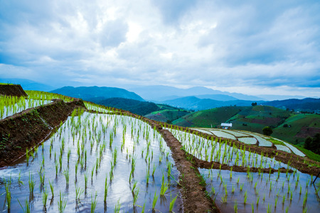 Landscape rice field Nature Tours On a mountain with a terraced field Evening landscap. in Thailand Pongpeng Forest. Stock Photo