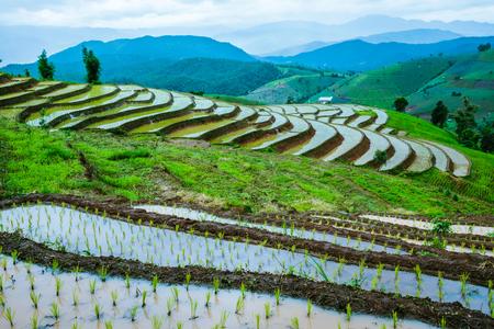 Travel Rainy Season landscape of Rice Terraces at Ban Papongpieng Chiangmai Thailand