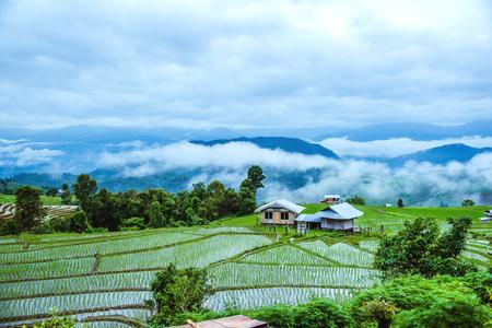 Reis door het regenseizoenlandschap van rijstterrassen bij Ban Papongpieng Chiangmai Thailand