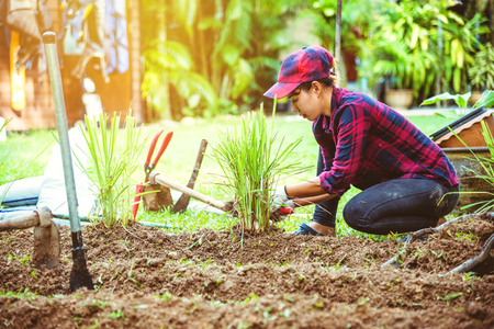 Asian women. Dig into soil the vegetable garden. plant lemon grass in vegetable plots. Stock Photo
