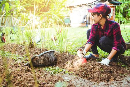 Asian women being dig the ground Planting lemongrass. Vegetable kitchen garden.