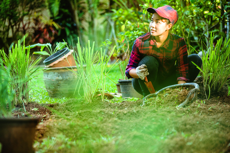 Asian women Planting lemongrass. plant vegetables