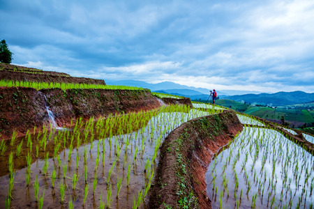 man asians natural travel relax. Walking take aPhoto of Rice Field. in summer.