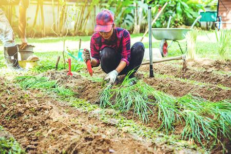 Asian men and women plant vegetables gardening at The backyard. Women asia dig into soil the vegetable garden. Happy with the vegetable garden.plant vegetable Allium tuberosum