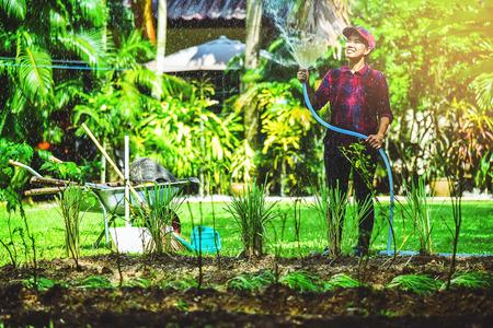 Asian women use hose garden watering the vegetable garden.