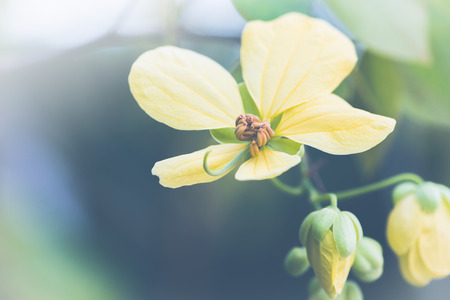 background nature Flower. Yellow flowers Background blur