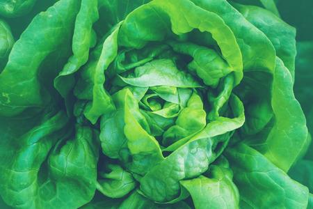 Natural background. lettuce garden. Fresh from the garden. Zdjęcie Seryjne - 121834410