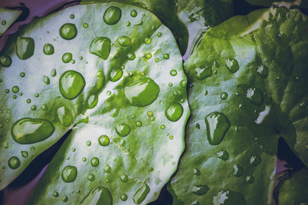 Natural background rain drops on the green leaf Stock Photo