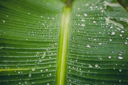 Natural background rain drops on the green leaf Foto de archivo
