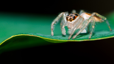Background Spider on a green leaf. Stock Photo