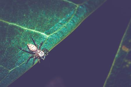 Background Spider on a green leaf. Black background