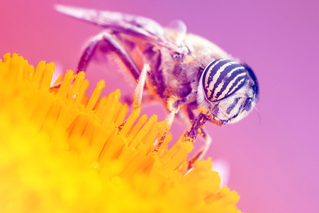 Photo Marco insect pollination yellow background color.