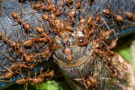 Illustration background red ant. Ant bite victims helped Standard-Bild