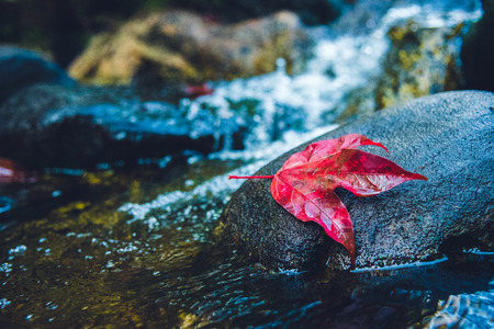 Natural background. Maple leaves on the rocks at the waterfall.