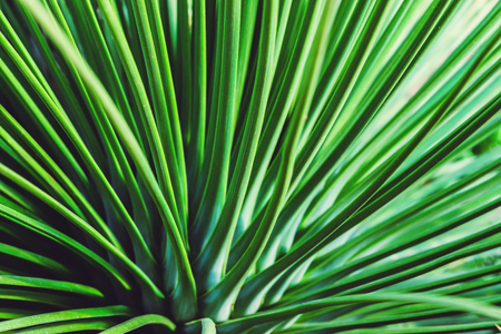 background nature cactus. Green cactus tree. Full frame