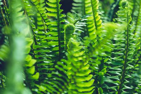 background nature fern exaltata. Green leaf. Full frame Stok Fotoğraf