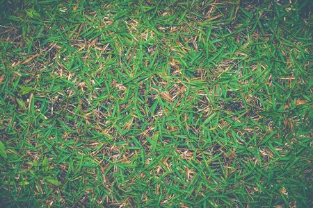 Background textured Abstract top view green color of grass background texture ,for background