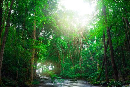 Wallpaper nature Waterfall stream. thailand doi-inthanon. Tropical style