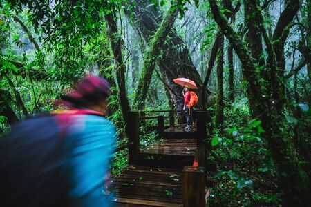 Lover asian man and asian women travel nature. Nature Study in the rain forest at Chiangmai in Thailand.