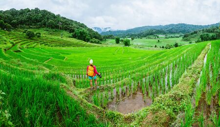 Asian women travel nature relax walking a photo on the rice field in rainy season in Chiang Mai, Thailand. 免版税图像