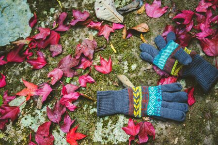 Natural background.Red maple leaves fall on the ground. And there are winter gloves. In Thailand