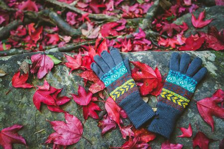 Natural background.Red maple leaves fall on the ground. And there are winter gloves. In Thailand Stock fotó