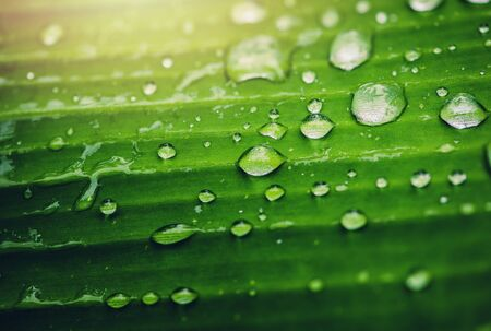 Natural background rain drops on the green leaf 版權商用圖片