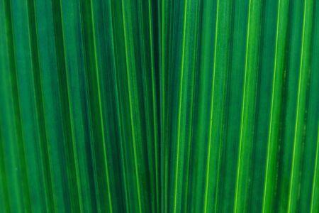 Natural background. Green leaves color. Full frame