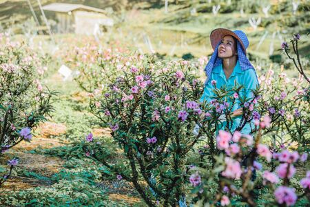 Female farmer workers are working in the apricot tree garden, Beautiful pink apricot flowers.