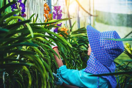 The young woman worker is taking care of the orchid flower in garden. orchid Plantation cultivation. Orchidaceae,Vanda coerulea