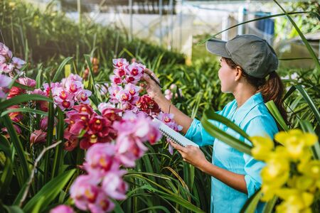 The girl notes the changes, orchid growth in the garden. Beautiful (Orchid) background in nature Standard-Bild