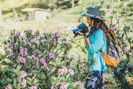 Asian woman travel nature. Travel relax. Standing photographing beautiful pink apricot flowers at apricot garden.