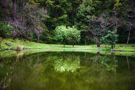 The beautiful landscape of trees reflected in the lake. background nature. Фото со стока