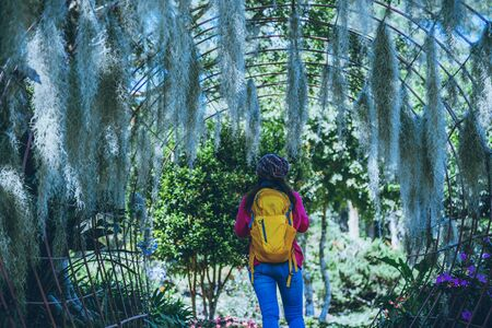 Women travel photograph Nature flower in the public park. take pictures spanish moss tree arch suitable as background. Фото со стока