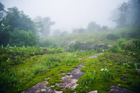 Attractions at (Phu Hin Rong Kla National Park) Landscape Beautiful on Mountain nature in the rain forest. travel nature, Travel relax, Travel Thailand, rainy season. Stock fotó