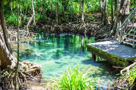 Landscape lake mangrove forest. tha pom-klong-song-nam at krabi in Thailand. summer, travel Thailand, tourist, Attractions, nature, national park.
