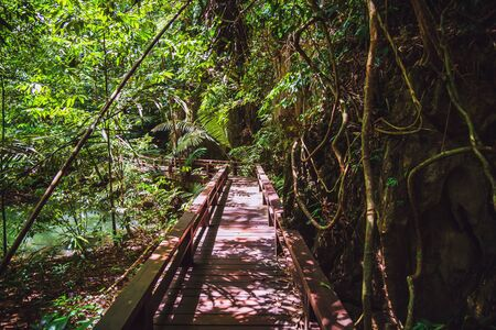Wooden bridge, nature trail, mangrove forest at Than Bok Thorni Waterfall National Park. nature, tourism, rural, forest, Attractions, Nature, Travel, mangrove forest, summer, Landscape. Stock fotó