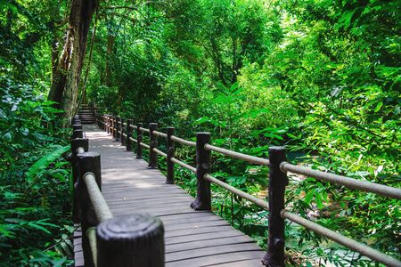 Wooden bridge, nature trail, mangrove forest at Than Bok Thorni Waterfall National Park. krabi, nature, tourism, rural, forest, summer, Attractions, Nature, Travel, mangrove forest, Landscape. Stock fotó