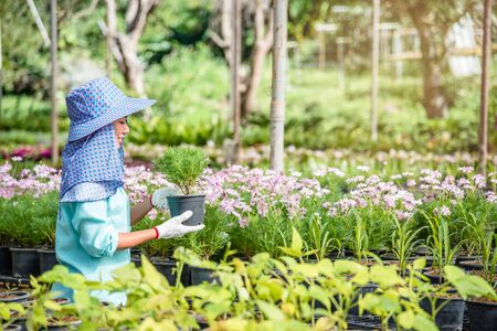 Growing plants of seedlings agriculture worker female in garden flowers she is planting young baby plants growingdling.