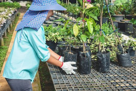 Greenhouse flower seedlings. The young womans hand holding a flower tree plant in a pot on hand, agriculture gardening background.